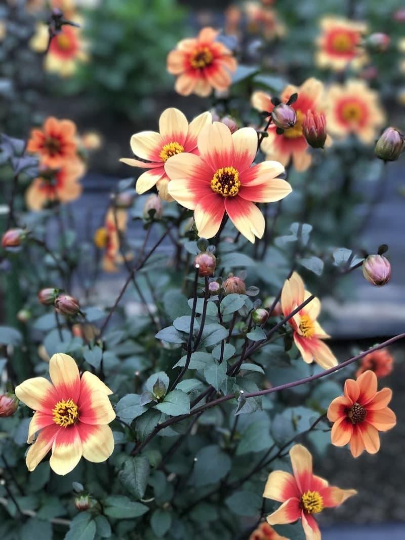 美しく咲く色とりどりの花々