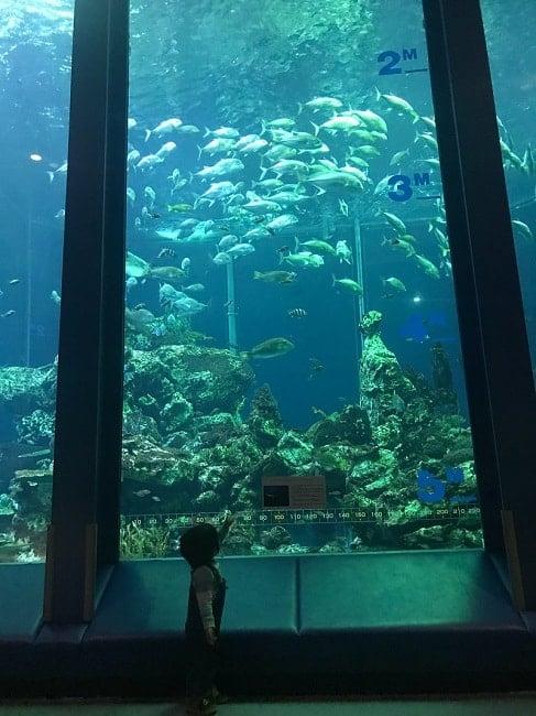 巨大な水槽