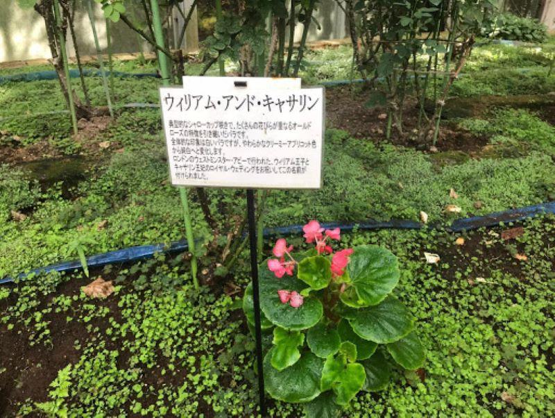 ウィリアムアンドキャサリンの花