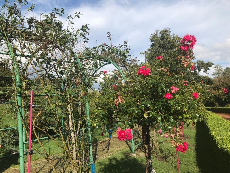 ローズガーデンに咲く花