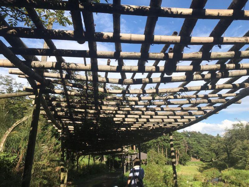竹のトンネル屋根